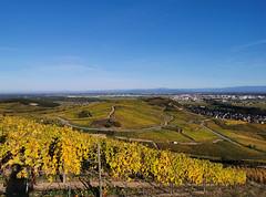 Vue depuis les vignes du Brand (Πichael C.) Tags: turckheim randonnée balade hike alsace 67 visite tourisme village