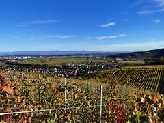 Vue sur Turckheim et la Plaine d'Alsace depuis les vignes du Brand (Πichael C.) Tags: turckheim randonnée balade hike alsace 67 visite tourisme village