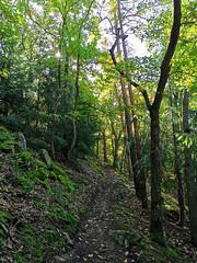 Montée en direction du sommet de l'Ehrbergkopf (Πichael C.) Tags: turckheim randonnée balade hike alsace 67 visite tourisme village