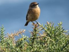 IMG_1435 (jesust793) Tags: pájaros birds naturaleza nature