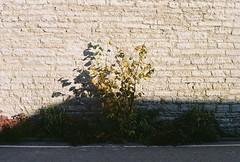Bricks (olovsebastian) Tags: canon canoneos canoneos620 eos kodakcolorplus200 colorplus200 tallinn analog analogue analoguephotography analogphotography film filmphotography