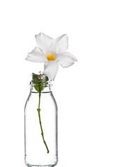WHITE IN BACKLIGHT (Pepenera) Tags: whiteinbacklight smileonsaturday stilllife fotografia photography canon white flower fiore flowers fleur