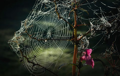 Beautifully Broken (Parchman Kid (Jerry)) Tags: complicated wet autumn morning web outside outdoors dew mist parchmankid sony a6500 jerry burchfield