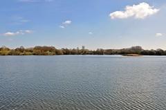 36333 (benbobjr) Tags: kingsburywaterpark acountryparkinnorthwarwickshireitislocatednorthofbirminghamandlyingontherivertameitisownedandmanagedbywarwickshirecountycouncilitisrenownedforitsbirdlife 000visitorsinitsfirstyear anumberwhichhadexpandedto350 000in2007 warwickshire northwarwickshire birmingham westmidlands midlands england english uk unitedkingdom gb greatbritain britain birminghamuk kingsbury bodymoorheath birminghamandfazeleycanal rivertame edwinsscarpepool pool lake mere naturereserve park wildlifehabitat warwickshirecountycouncil midlandgravelcompany countrypark