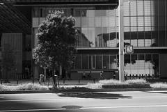 September 2019_71 (Satoshi Kondo) Tags: bw bnw blackandwhite blackandwhitephotography blackandwhitephoto bnwphoto bwphoto bnwphotography bwphotography blackandwhitepoto blackandwhitepotography monochrome leica leicam3 leicaphoto leicaworld street streetphoto streetsnap streetphotography summicron snap streets summicron50mm 50mm filmphotography filmphoto filmcamera filmpoto filmpotography flimphotography film kodak kodaktx400