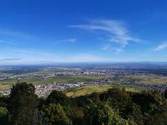 Vue sur la plaine d'Alsace et Colmar depuis le Château du Hohlandsbourg (Πichael C.) Tags: turckheim randonnée balade hike alsace 67 visite tourisme village