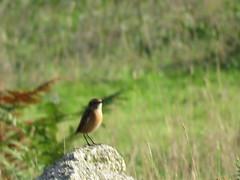 IMG_1300 (jesust793) Tags: pájaros birds naturaleza nature