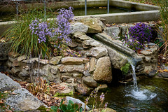 Flow (bhanakam) Tags: water flow stones rocks flowers outdoors contrast color autumn fall germany bavaria franconia