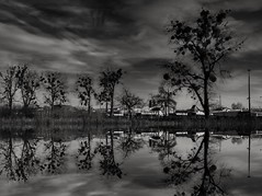 Twilight (wojciechpolewski) Tags: twilight blancoynegro blanconegro blackwhite schwarzweis blackandwhite blancoenegro poland wpolewski nightnature nature night landscapenight nightlandscape landscape trees water reflection clouds moonlight photos photo