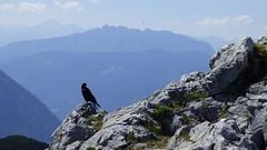 Fernsehen für Dohlen / TV for jackdaws (ursula.valtiner) Tags: landschaft landscape berg mountain alpen alps trisselwand dohle jackdaw ausseerland salzkammergut steiermark styria austria autriche österreich
