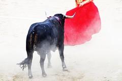 dust (aficion2012) Tags: ceret 2019 fraile joselillo corrida bullfight bull tauromachie tauromaquia francia france catalogne catalunya taureau toros torero matador toreador muleta tauromachy high key