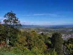Vue sur la plaine d'Alsace et les Vosges du Nord depuis le Château du Hohlandsbourg (Πichael C.) Tags: turckheim randonnée balade hike alsace 67 visite tourisme village