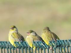 IMG_1346 (jesust793) Tags: pájaros birds naturaleza nature
