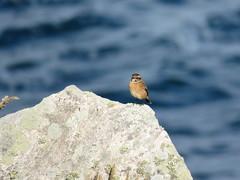 IMG_1394 (jesust793) Tags: pájaros birds naturaleza nature