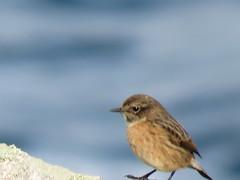 IMG_1401 (jesust793) Tags: pájaros birds naturaleza nature