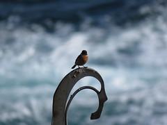 IMG_1500 (jesust793) Tags: pájaros birds naturaleza nature