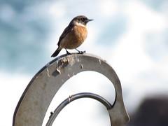 IMG_1503 (jesust793) Tags: pájaros birds naturaleza nature