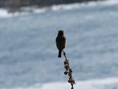 IMG_1524 (jesust793) Tags: pájaros birds naturaleza nature