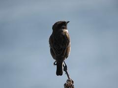 IMG_1527 (jesust793) Tags: pájaros birds naturaleza nature