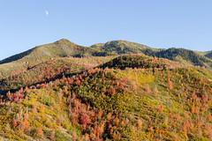 Fall Colors on Utah Mountains (aaronrhawkins) Tags: colors fall tree leaf red orange utah mountain provo canyon southfork autumn dusk sundown evening shadows peak season aaronhawkins