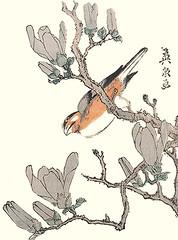 Magnolia and Java sparrow (Japanese Flower and Bird Art) Tags: flower magnolia magnoliaceae bird java sparrow padda oryzivora estrildidae eisen ikeda ukiyo woodblock print japan japanese art readercollection