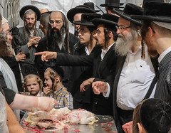 Will he be vegetarian when he grow up? (ybiberman) Tags: israel jerusalem meahshearim yomkippur dayofatonement feast kapparotmarket kapparot ritual boy people ultraorthodox jews portrait candid streetphotography payot kippah documentary chicken slaughter