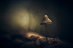Fading Light (micke.vmix) Tags: carlzeiss zeiss aposonnart2135 sonnar135f2zf d850 mushroom