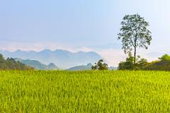 _J5K3436-38.Bản Dọi.Tân Lập.Mộc Châu.Sơn La (hoanglongphoto) Tags: happyplanet asiafavorites asia asina vietnam northvietnam northernvietnam northwestvietnam landscape scenery vietnamlandscape vietnamscenery mocchaulandscape sky mountain flanksmountain tree ricefields morning sunnymorning morningsunshine canon canoneos1dsmarkiii canonef2470mmf28liiusm tâybắc sơnla mộcchâu tânlập bảndọi phongcảnh phongcảnhmộcchâu buổisáng nắng nắngsớm bầutrời núi sườnnúi cây ruộnglúa hdr