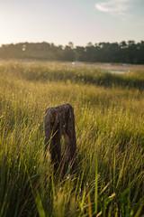 Morning light (BrianEden) Tags: grass capecod beach sunrise fence post massachusetts light harwich chatham jackknifecove