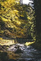 Schwarzwassertal - Fotowalk - Oct. 2019