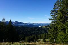 DSC02647 (Bergwandern Alpen) Tags: alpen alps bergwandern hiking nüssen kantonschwyz berglandschaft bergpanorama zaun nadelwald fence bluesky