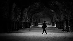 across the park (heinzkren) Tags: austria wien vienna park parc allee bäume trees schwarzweis biancoetnero blackandwhite noiretblanc bw sw monochrome mann man street streetphotography candid dark canon eosr schönbrunn garden avenue outside natur herbst autumn fall