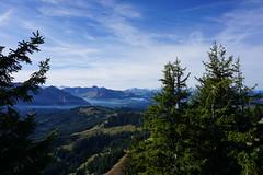 DSC02811 (Bergwandern Alpen) Tags: alpen alps bergwandern hiking kantonschwyz berglandschaft rosenhöchi nadelwald