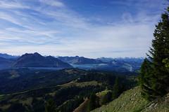 DSC02820 (Bergwandern Alpen) Tags: alpen alps bergwandern hiking berglandschaft fluebrig kantonschwyz rosenhöchi nadelwald