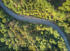 Curves (Yer Photo Xpression) Tags: ronmayhew djimavicpro road trees curves aerial landscape