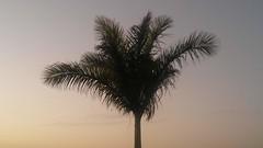 20190114_194633 (rugby#9) Tags: palmtree tenerife canaryislands canaries dusk sunset silhouette sky tree