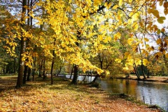 Voilà l'automne..... (Ezzo33) Tags: nammour ezzat ezzo33 france aquitaine 33 bordeaux ville parc ciel paysage sony rx10m3 blanquefort majolan