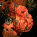 Lucky Find - Frogfish