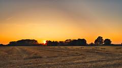 Bei Wiefels-Landkreis Wangerland (Jürgen von Riegen) Tags: niedersachsen landkreis wangerland friesland wiefels landschaft sonnenuntergang wiese bäume feld landscape sunset sun trees meadow lumix lumixg9 panasonicg9 outside outdoors fave