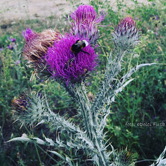 July 26th, 2019 #Capestrano (Dolci Fusa) Tags: ©dolcifusa photography photo picture pic picoftheday instapic instagraphy art focus shoot macro macrophotography flower flowers feliceadesso igabruzzo igersabruzzo igramersitalia igramerscapestrano
