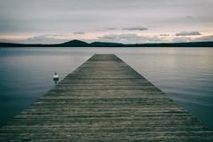 lac de madine, france (Al Fed) Tags: 20190626 france lacdemadine madine tour vogesen vosges water lake calm steg footbridge