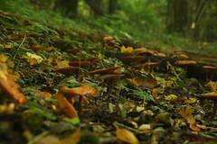 IMG_3512 (ChPflügl) Tags: salzburg österreich austria autumn fall herbst spazieren puch bei hallein urstein sunshine altweibersommer salzach kitsch chpflügl chpfluegl christian europe europa eu world erde