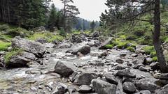 Lutour valley (Pyrénées, France) (oli-31) Tags: pontdespagne pyrénées cauterêts lutour valley vallée montagne mountain