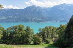 Lake Brienz (Bephep2010) Tags: 2019 7markiii alpen alpha berg bern brienzersee himmel ilce7m3 lakebrienz oberried oberriedambrienzersee sel24105g schweiz see sommer sony switzerland wald wolken alps clouds forest lake mountain sky summer ⍺7iii kantonbern