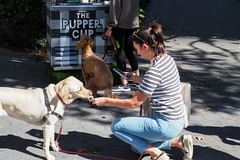 Multitasking (Eclectic Jack) Tags: september 2019 trip nyc city york new newyorkcity dog pet animal canine multitask phone icecream cream ice park streetphotography candid people street photography