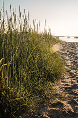 Morning light (BrianEden) Tags: grass capecod beach sunrise light massachusetts sand harwich chatham jackknifecove