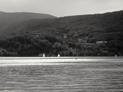 Romantic nature (michelrizzo) Tags: helios44 olympus penf blackandwhitephotography naturephotography natureisamazing lake annecy