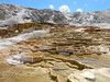 The terraces and thermal pools of Mammoth Hot Springs (Matt Lavin) Tags: dichantheliumacuminatumsubspsericeum poaceae paniceae coolseason native bunchgrass perennial mammoth wyoming parkcounty