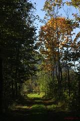 IMG_3462 (ChPflügl) Tags: salzburg österreich austria autumn fall herbst spazieren puch bei hallein urstein sunshine altweibersommer salzach kitsch chpflügl chpfluegl christian europe europa eu world erde trees baum bäume