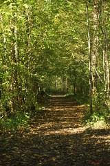 IMG_3424 (ChPflügl) Tags: salzburg österreich austria autumn fall herbst spazieren puch bei hallein urstein sunshine altweibersommer salzach kitsch chpflügl chpfluegl christian europe europa eu world erde